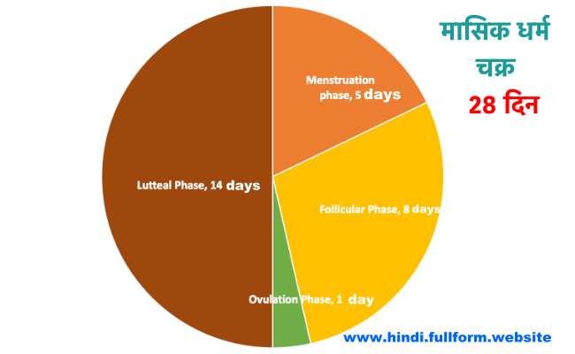 Menstrual cycle in hindi